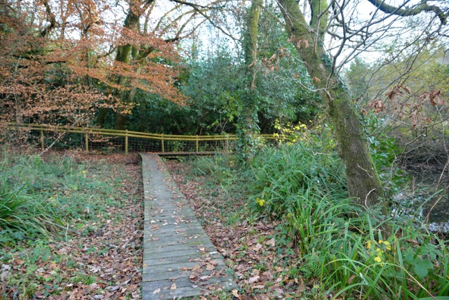 Staverton Boardwalk